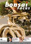 Bonsai Focus DE #44 Preview